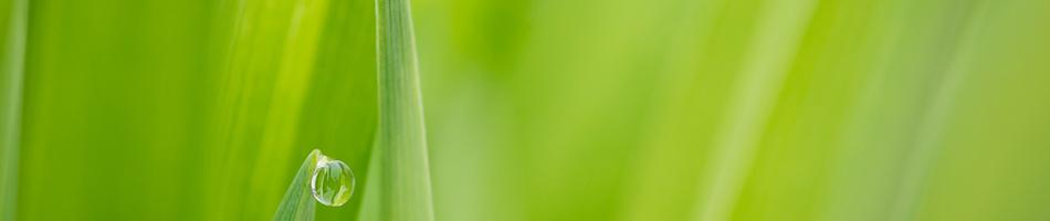 Naturheilpraxis Bachlmühle